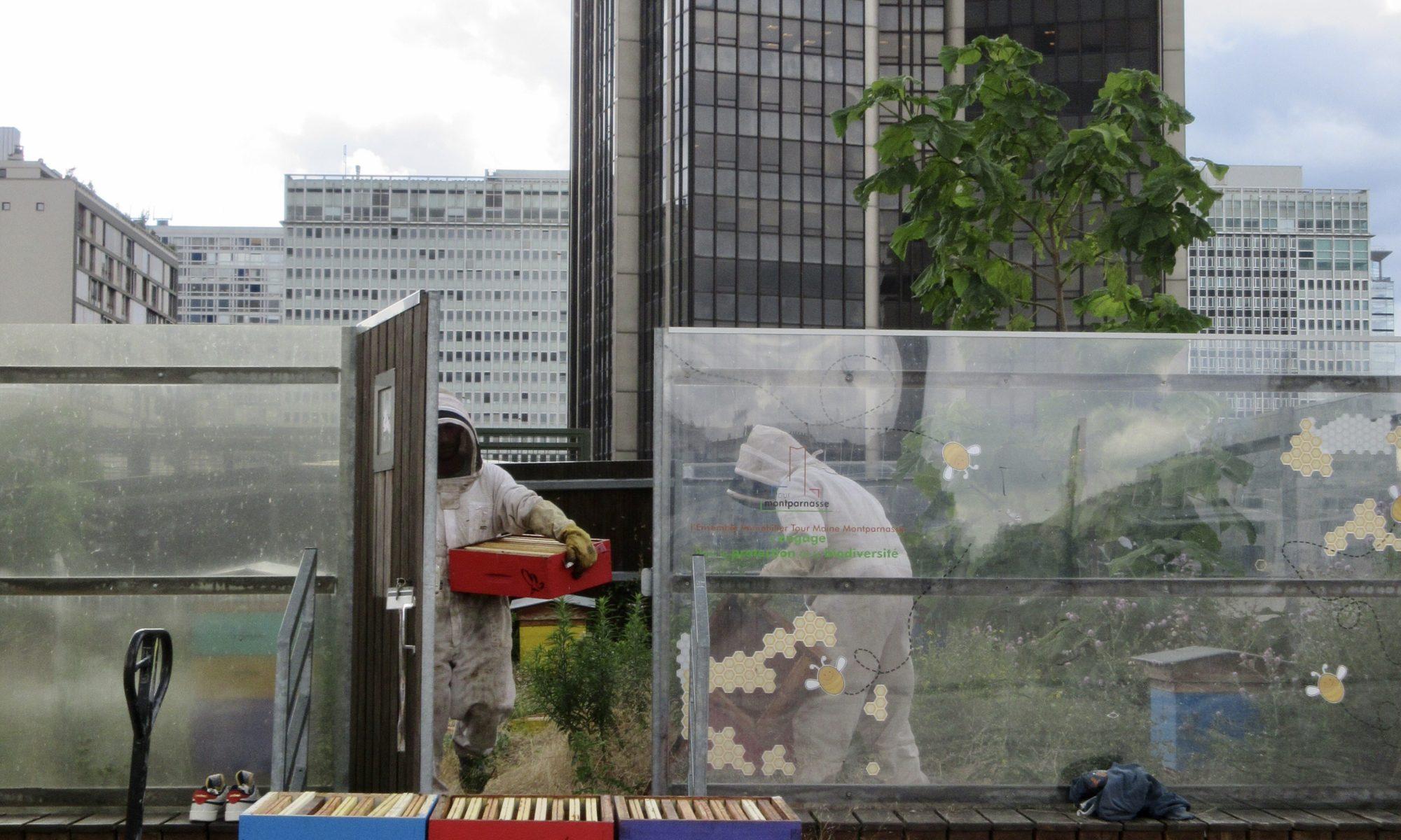 Le rucher Abeilles et Miel de la tour Montparnasse à Paris